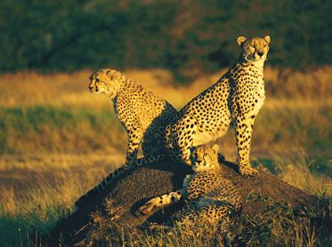 #SafariInKenya  has created an years of experience in Africa . check  out more @ http://kenya-safaris.co/