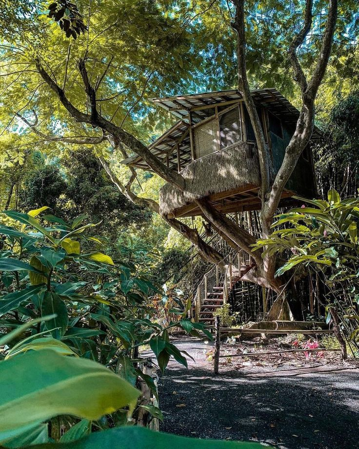 Tree House Of Life Airbnb In 2021 Puerto Rico Pictures Tree House Puerto Rico