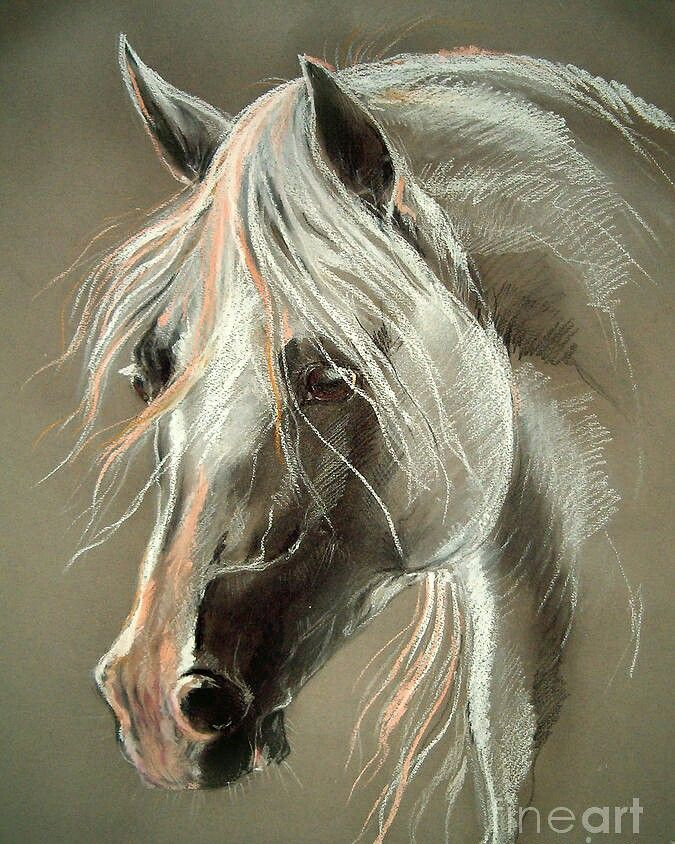 2836 best images about Horses + on Pinterest | Beaudry ...