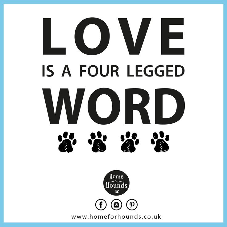 Love is a four legged word xxx #‎homeforhounds #‎dogdaycare #‎quoteoftheday #‎inspiration #‎doglove #‎loveyourpets #‎bestfriends #love #fourleggedfriend #happiness