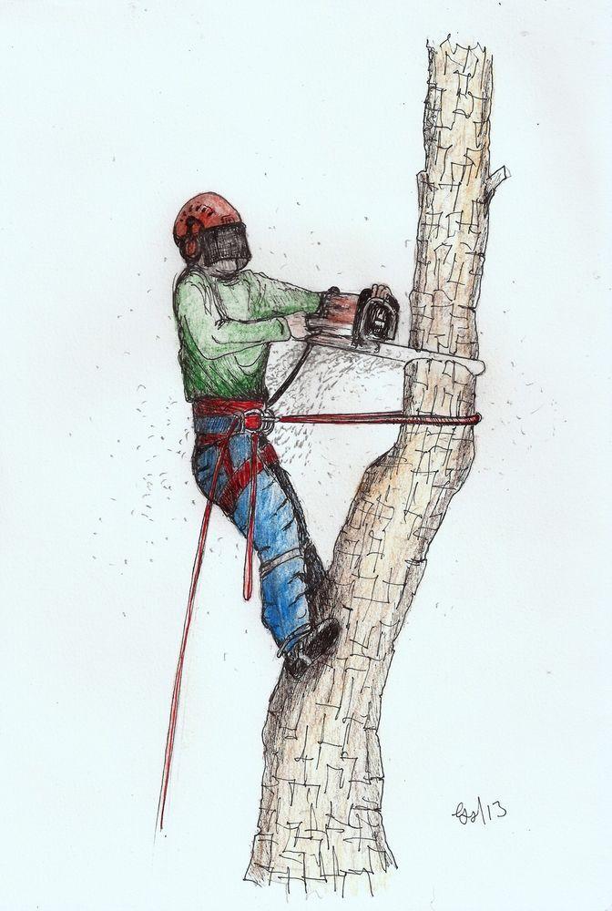 Best stihl husqvarna arborist tree surgeon images on