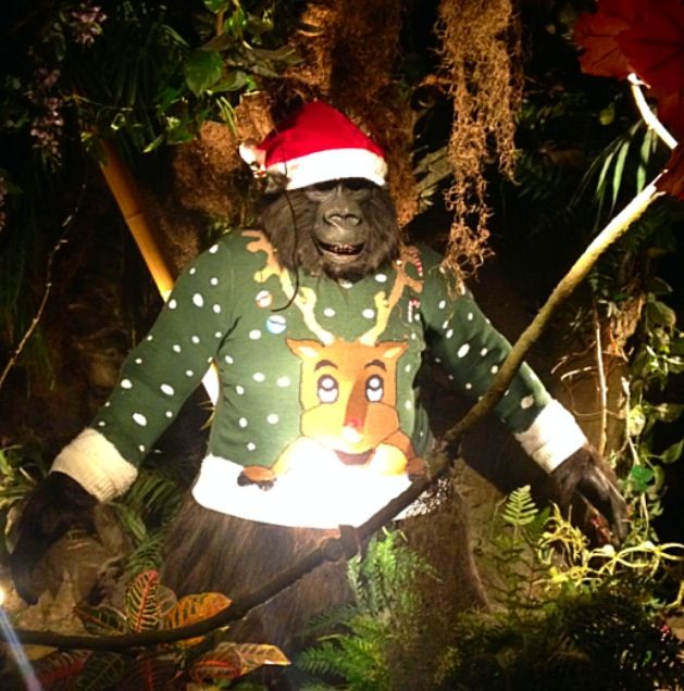 Bamba the Mountainback Gorilla has got really dressed up for the occasion! He loves Christmas! http://www.therainforestcafe.co.uk/christmas.asp