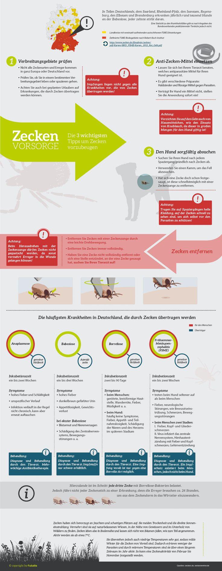 die besten 10 ideen zu beagle welpen auf pinterest niedliche welpen niedliche hunde und beagles. Black Bedroom Furniture Sets. Home Design Ideas
