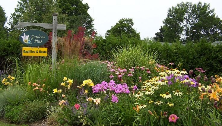 How about a bunch of phlox, conflowers and daylilies! You can do this too! .