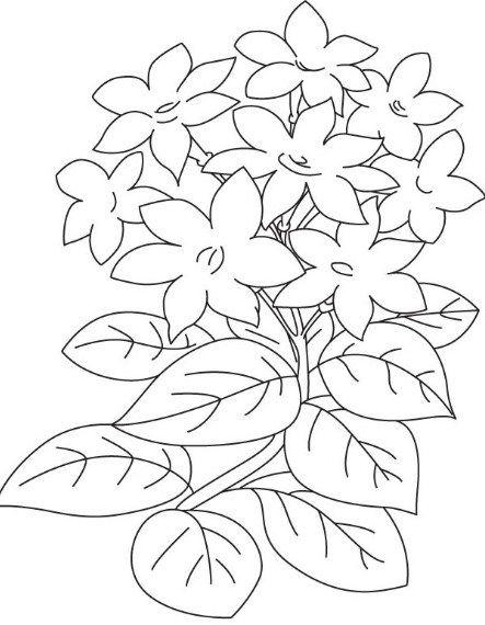 Gambar Bunga Melati Kartun