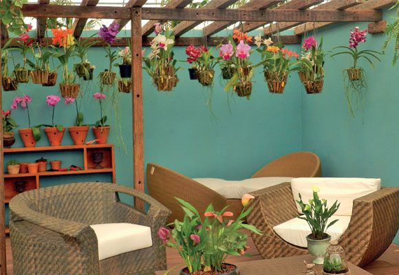 Dicas para orquidários - Plantas - Plantas, Flores e Jardins