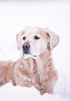 Snow Doggie!