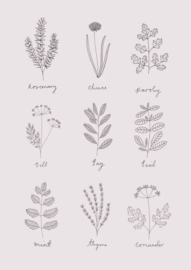 30 Ways To Draw Plants Leaves Herbs Illustration Plant Sketches Leaf Drawing
