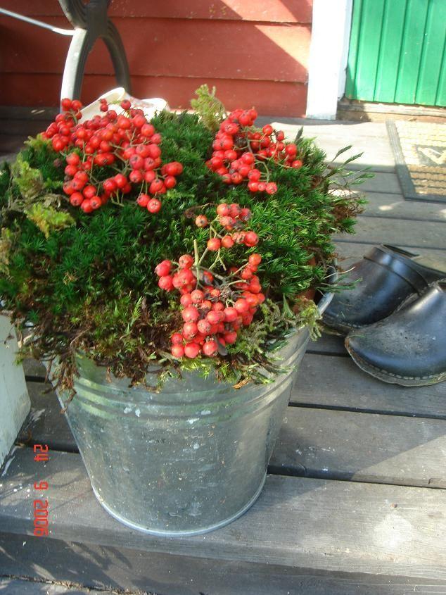 rönnbär - Sweden