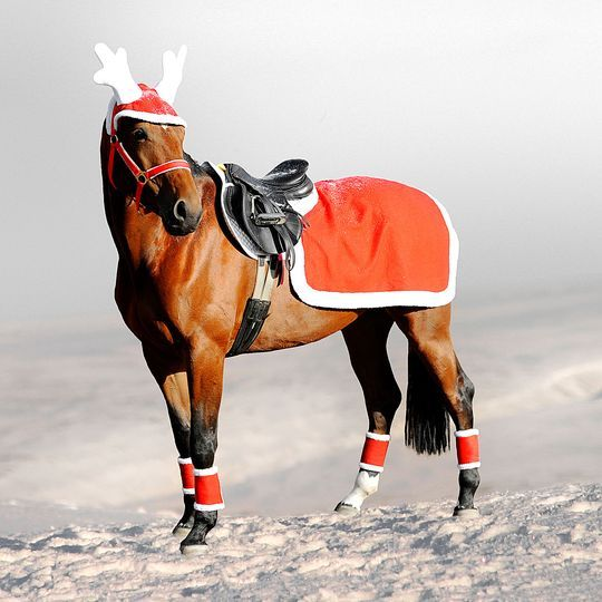 - Christmas Outfit T A C K Horses, Christmas Horses, Equestrian