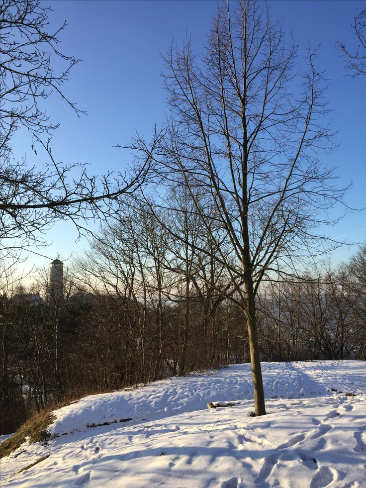 Jena, Fuchsturm, Januar 2017