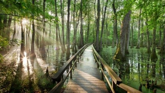 Cypress Swamp - Natchez Trace Parkway - Holly Springs?