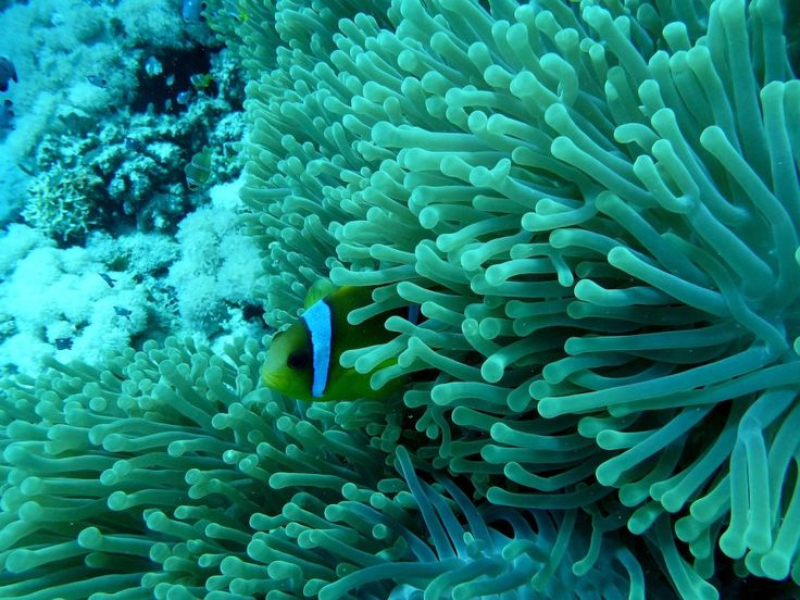 coral reef | Can The Newly Developed 'Coral On A Chip' Save The World's Reefs ...