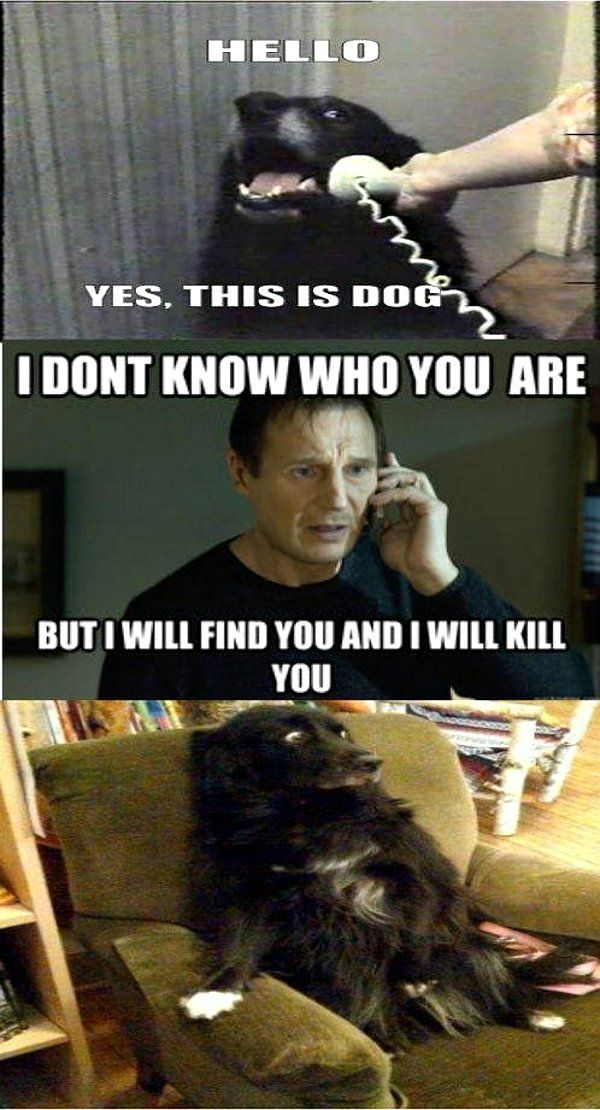 this is dog meme. The best. Haha! Love his face