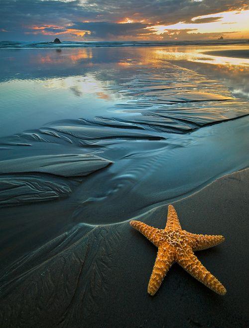 StarfishSea Stars, Beach Sunsets, Sunsets Beach, Cannon Beach, The Ocean, Beautiful, Starfish, Ocean Sunset, At The Beach