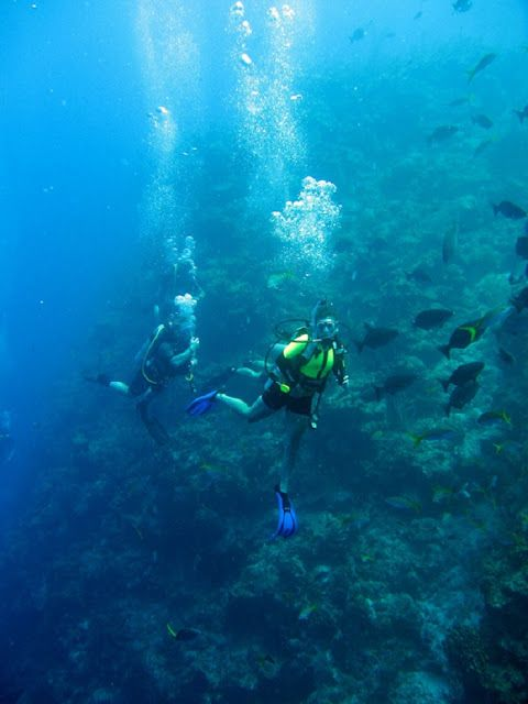 Best Best Scuba Diving Places To Go Images On Pinterest Scuba - The 10 best scuba diving locations in the world