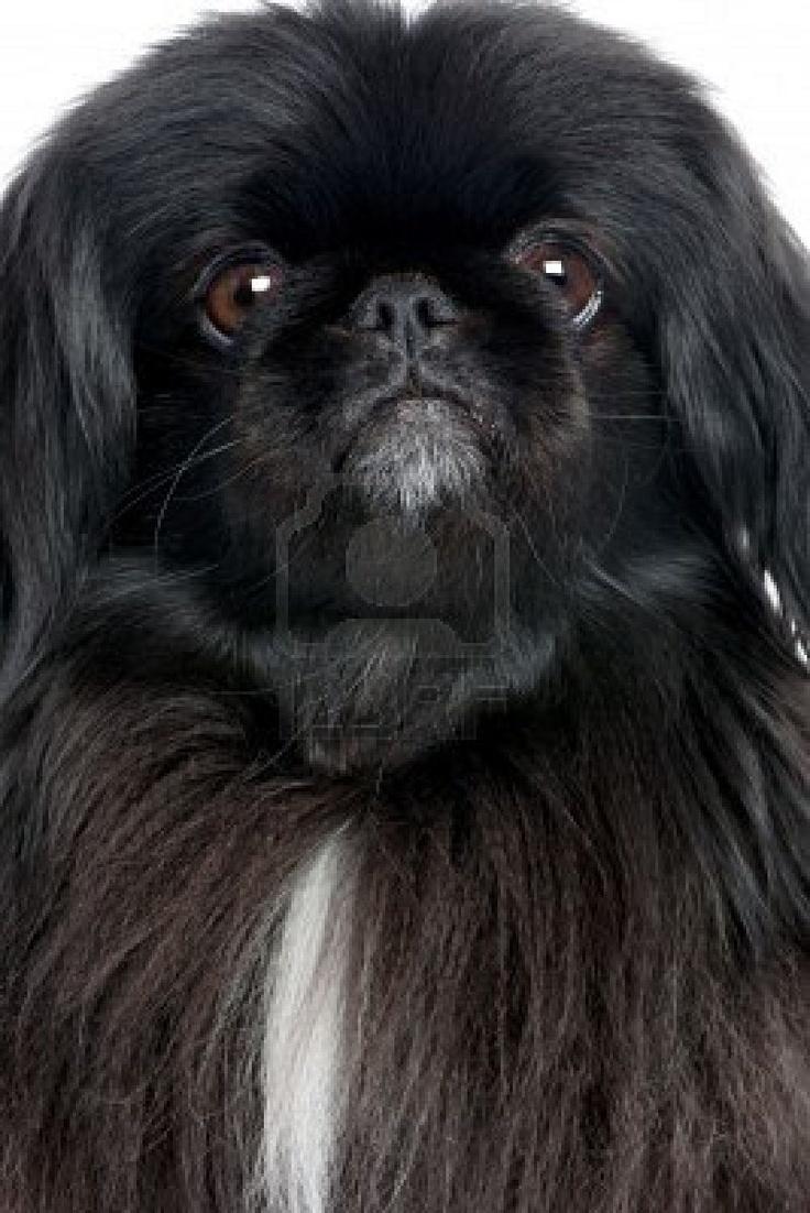 Awwww this looks like my buddy Gizmo!