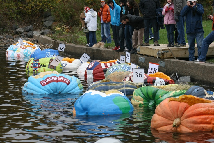 Hollowed out pumpkins used to race in Windsor, Nova Scotia during the annual Pumpkin Regatta.
