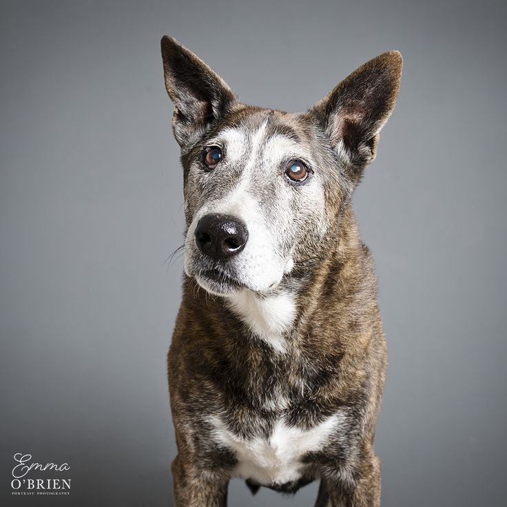 Nandi, photographed by Emma O'Brien for the 2015 Sandton SPCA Golden Oldies calendar.