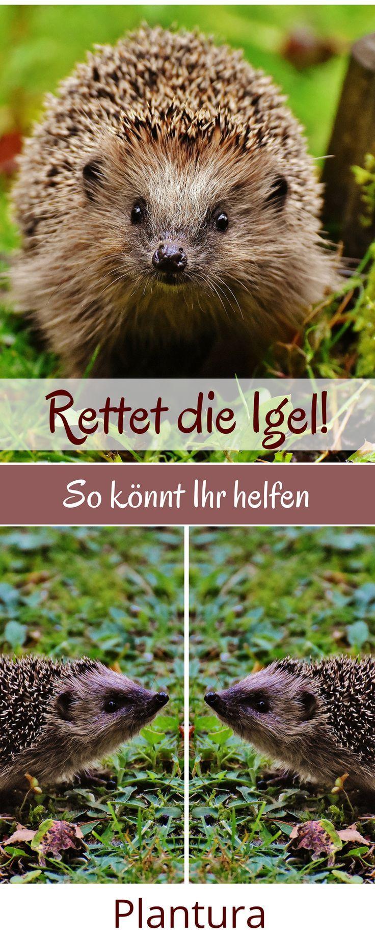 Igel retten: So könnt Ihr Igeln helfen, indem Ihr Euren Garten igelfreundlich gestaltet.