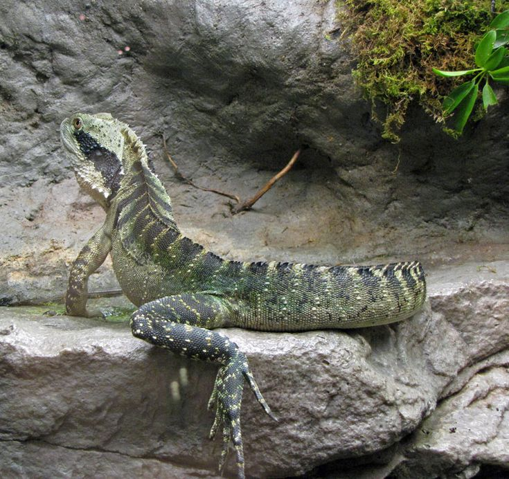 100 Best All Things Lizard/Snake Images On Pinterest