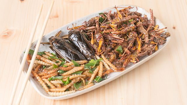 Could Edible Insects Help Global Food Security?