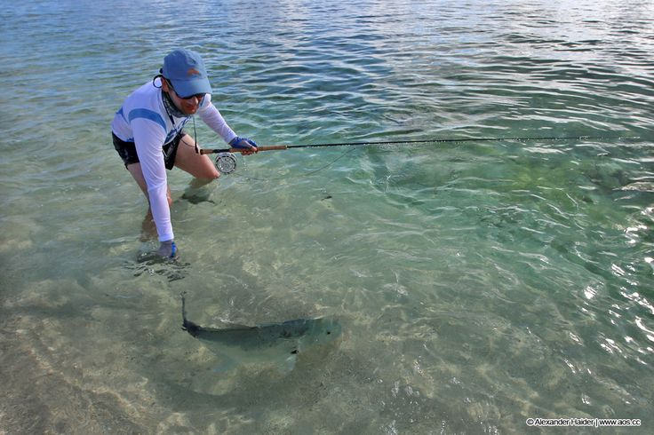 22 best images about giant trevally on pinterest surf for Fly fishing maui