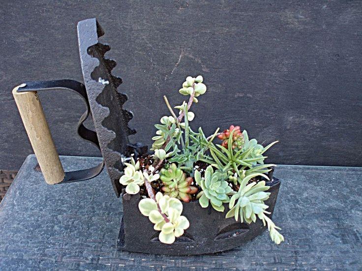 Σπάνια Φυτά Κάκτοι Παχύφυτα: Παλαιο σιδερο με παχυφυτα