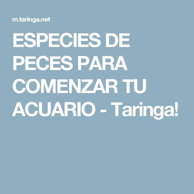 ESPECIES DE PECES PARA COMENZAR TU ACUARIO - Taringa!