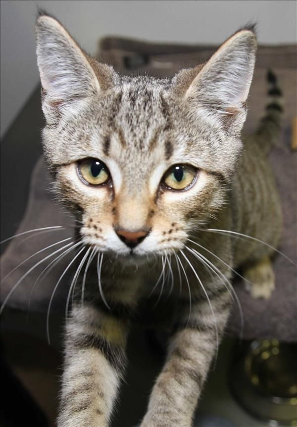Hey there, I'm Manni. I'm a real people person who loves to cuddle and am looking for someone to show me the world isn't such a scary place. Could that be you? Come meet me in Rockhampton. http://bit.ly/2shIZHF