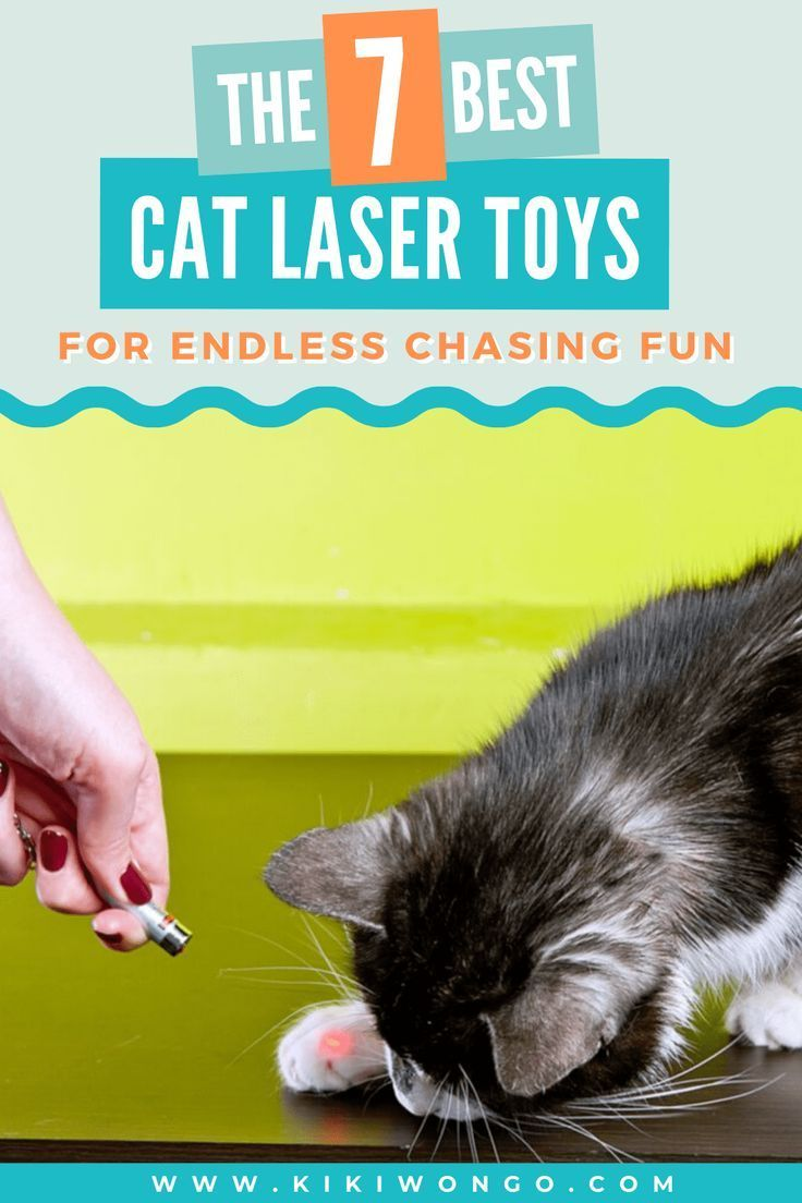 The Best Cat Laser Toys For Endless Chasing Fun In 2020 Cat Laser Toy Cat Laser Cats