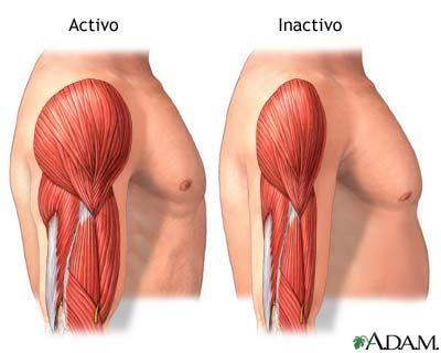 La falta de actividad física puede generar #sarcopenia, la pérdida de masa muscular; esto desencadena otros problemas de #salud, como la resistencia a la insulina o debilitamiento óseo.