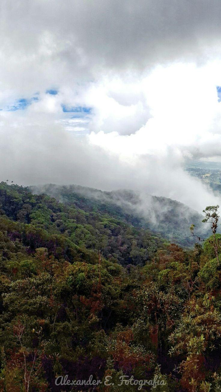 Deep in the woods. Reserva Natural San Sebastian La Castellana in Envigado Antioquia.