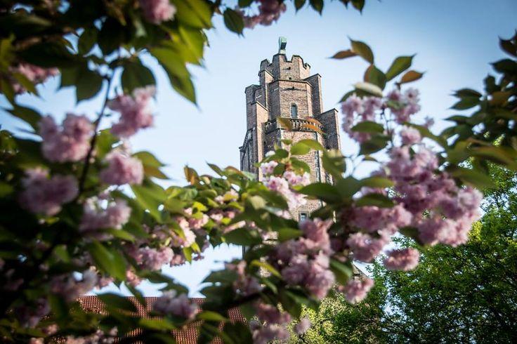 Wieża kościoła pw. wszystkich świętychw wiosennej oprawie :-) fot.Z.Daniec