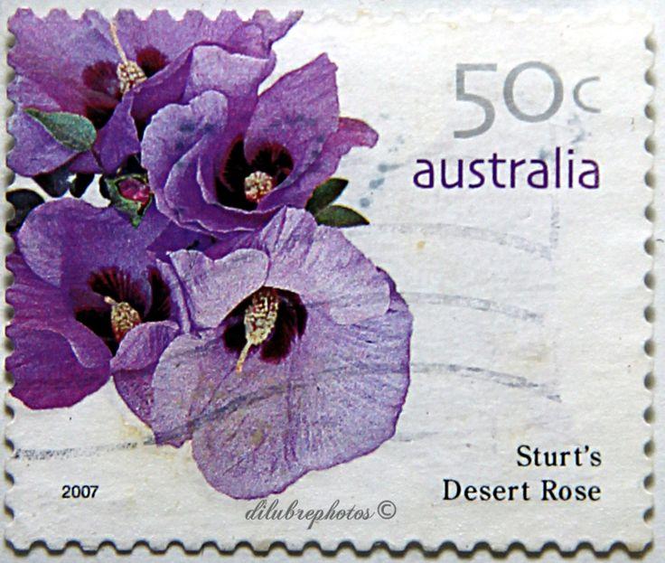 Australia.  FLOWERS.  STURT'S DESERT ROSE.  Scott 2615 A724, Issued 2007 Feb 13, Litho, Perf. 14 x 14 1/2, 50c. /ldb.