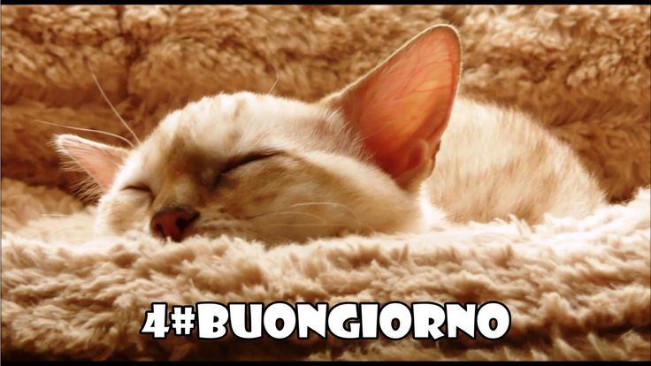 4#BUONGIORNO (Svegliati e sorridi...)