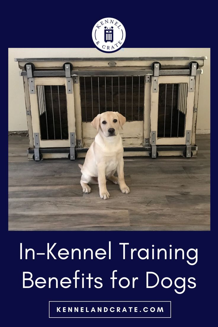 In Kennel Training Benefits For Dogs In 2020 Best Dog Toys Dog Kennel Dogs