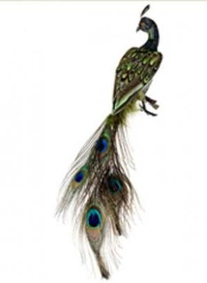 """This is wonderful specimen of  a Peacock Bird that is overall in length 13"""" that comes with a clip that you may attach to an ivy, tree or simply add interest to a container."""