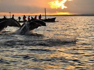 Dolphine watching at Lovina north Bali start at 6 am till 8 am, we pic up you at hotel , price 15 $ /person