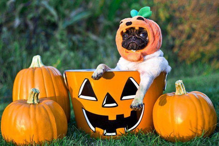 Картинки для, смешные картинки к хэллоуину