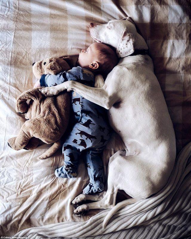 Amor animal: cachorra resgatada é melhor amiga de bebê de 8 meses