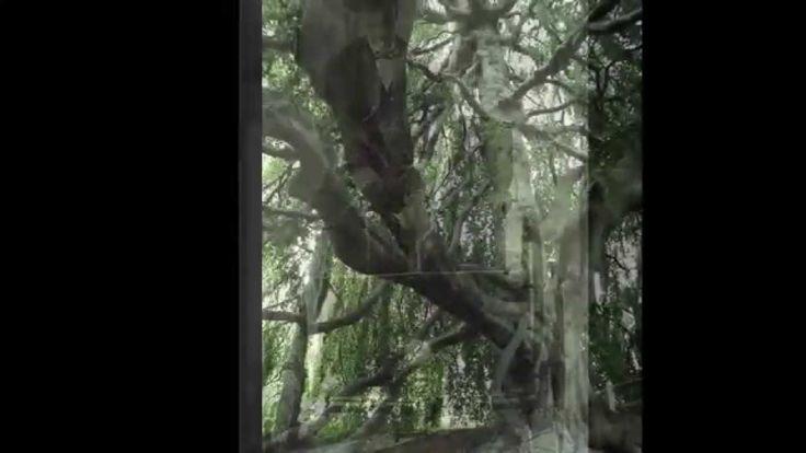 LOS TRES ARBOLES -NINI ESTRADA