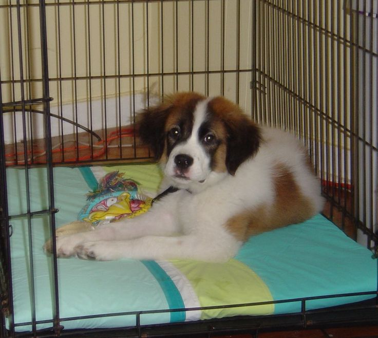 DIY puppy waterproof bed. No sewing required! This is right up my alley.