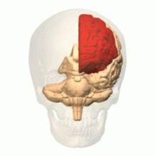 Frontal lobe injury - Wikipedia, the free encyclopedia