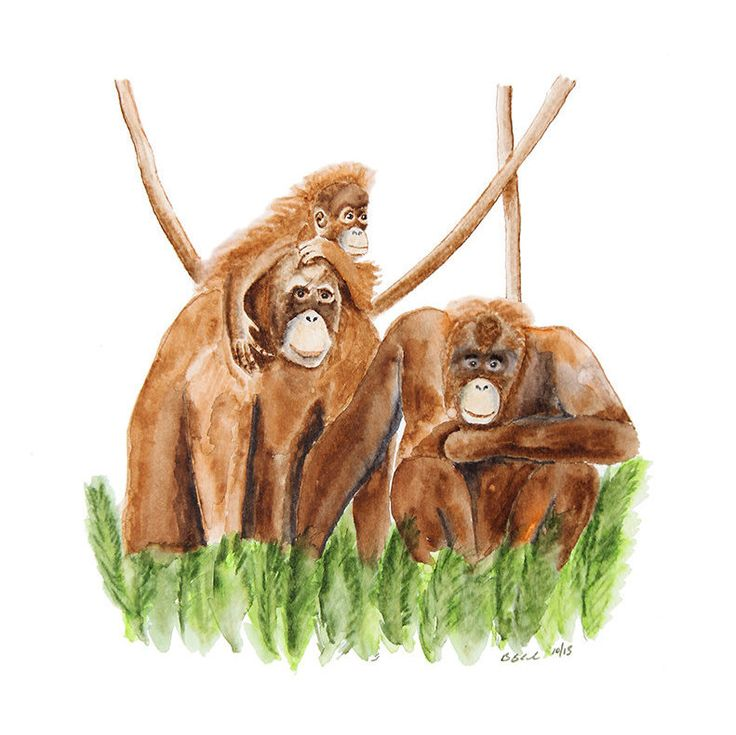 New to TinyToesDesign on Etsy: Orangutan Monkey Art Animal Wall Art Monkey Nursery Jungle Nursery Wall Art Watercolor Brown Green Art Print - 8.5x11 (15.00 USD) #nurseryart #tombowpro