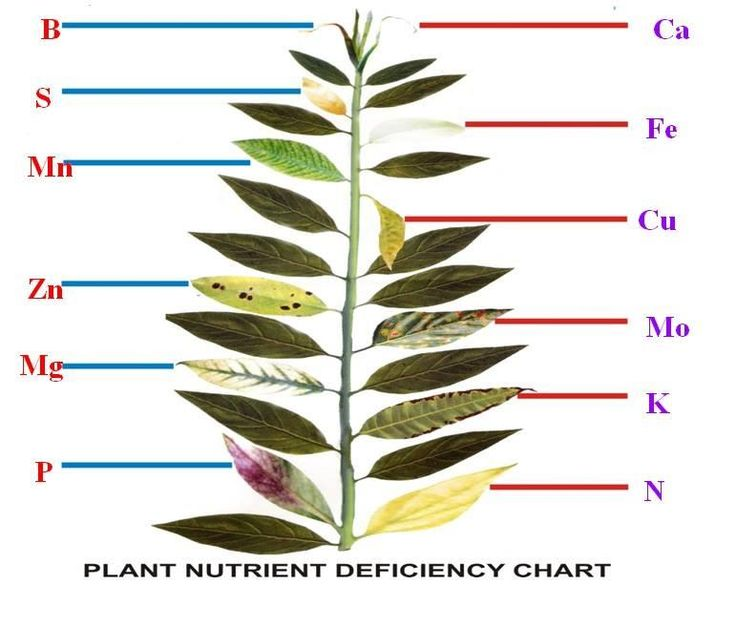 Plants speak to us through their leaves what they want. Farmers must keenly understand the language of their plants.