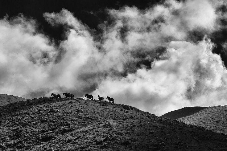 Gallinola, Molise, Italia - Free horses