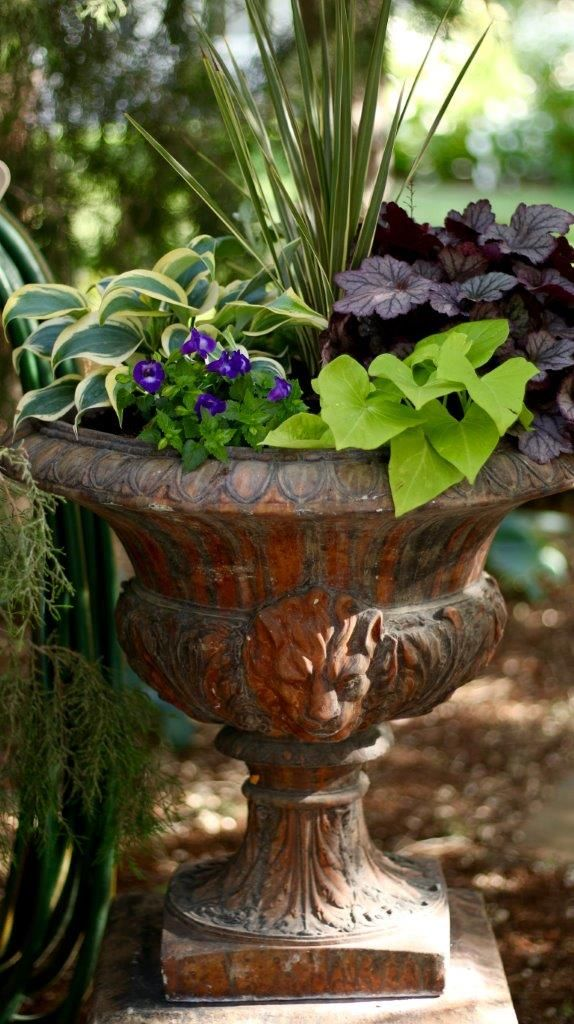 342 best Shade Container Gardening images on Pinterest Potted