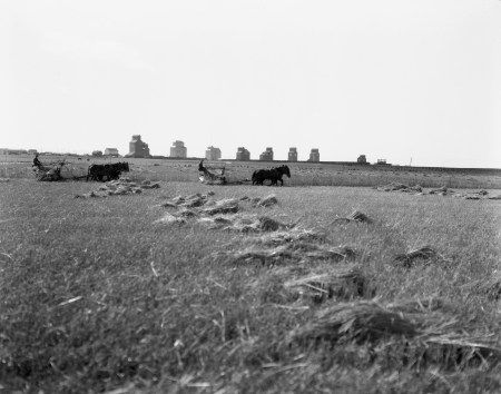 A long row of eight elevators had been built at Vulcan by 1924 and provided a backdrop for this harvest scene at Vulcan. (Glenbow Archives, NA-2059-27)