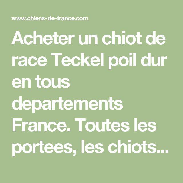 Acheter un chiot de race Teckel poil dur en tous departements France. Toutes les portees, les chiots de race, les eleveurs et chiens de race sont sur Chiens-de-France.com.